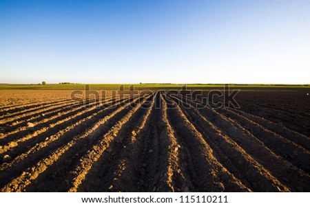 the plowed agricultural field on which grow up potatoes