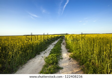 the road which is passing across the field on which grow up a colza