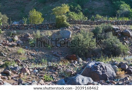 The sheep are lying in the nest, the sheep are many Foto stock ©