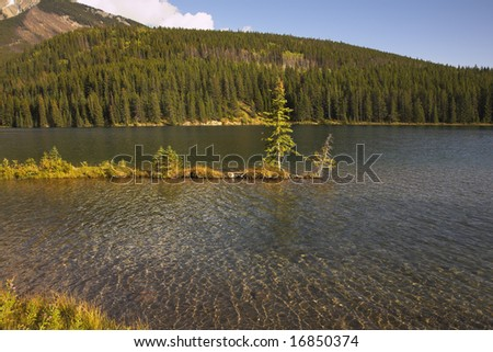The small pine growing on a shallow in northern lake in Canada