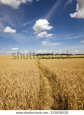 the small trodden footpath in an agricultural field #225838528