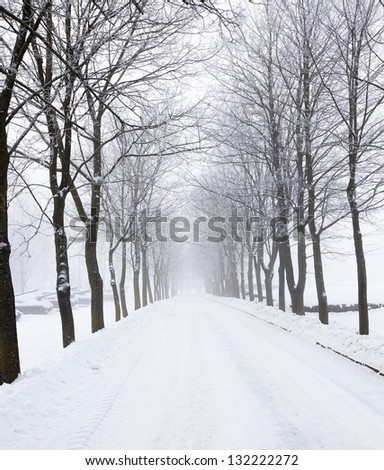 the snow-covered road in park in a winter season. at the left there are the tanks covered with snow