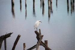 The Teich ornithological park, Gironde, France
