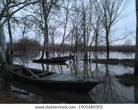 THE TRADITIONAL BOATS OF THE ARNO - Walking along the swamp in the middle of nature Foto d'archivio ©