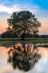 The water reflection of the big tree in the field