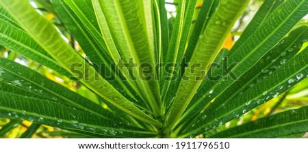 the wet leaves from the rain in the morning look so soothing to the eyes Photo stock ©