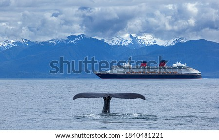 The whale shows the tail    on  cruise  liner and     snow mountains   background, Alaska, the USA