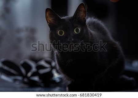 The world sentiment about black cats has been mixed. Black cat superstition has been a real phenomenon throughout history, and this has led to many misguided notions about them. Photo stock ©