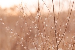 thin branches of a shrub, swaying in the wind against the sky, abstract natural background, made in light pastel colors.
