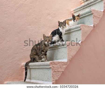 Three companioned cats of various colors posture behind each other on a pale pink stony outside stairway in a village on the Greek island Chios, North Aegean, Greece, Europe