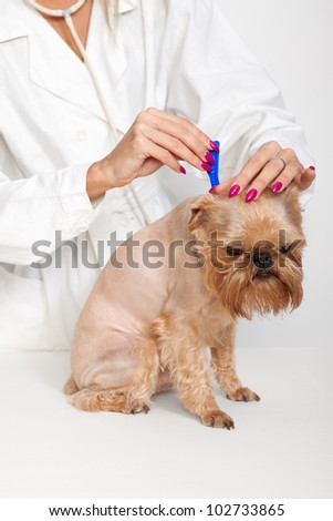 Tick prevention for Dogs breed Griffon Bruxellois