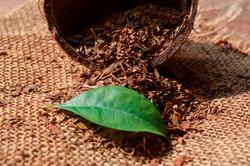 Tobacco green leaf on Tobacco dry background. High quality green tobacco leaf and dry cut tobacco big leaf, macro close up.
