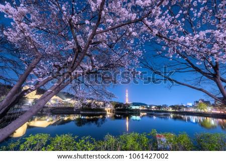83 Tower is a landmark of Daegu city at night and cherry blossom tree during the spring season this area is popular sakura spot at in Daegu city South Korea.