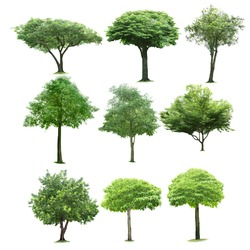 9 tree