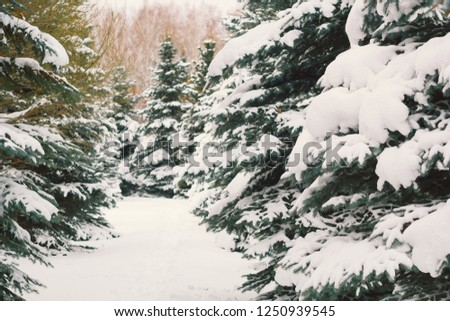 tree forest covered by snow winter christmas holidays time #1250939545
