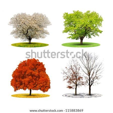 tree in four season isolated on white backgroud