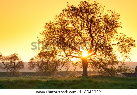 tree in golden sunset