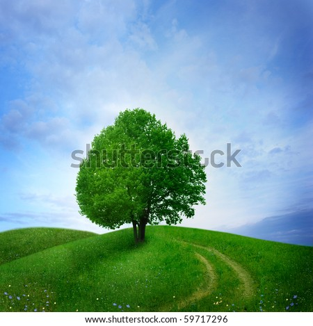 tree in green meadow