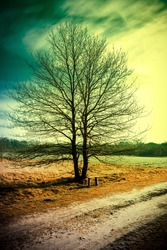 tree in the winter with no leaves done with a retro vintage instagram filter