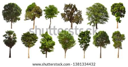 Tree set, isolated tree Set on a white background #1381334432
