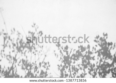Tree Shadow Branch on Wall Natural Abstract Background. #1387713836