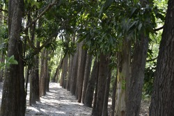 Tree trail, nature preservation on ecotourism farm, path between trees on ecotourism farm in south america, Brazil