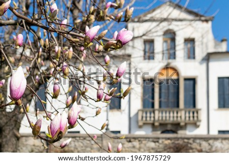 tree with fiola flowers and ancient house on background Stock fotó ©