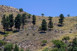 trees on rocky mountain and blue sky