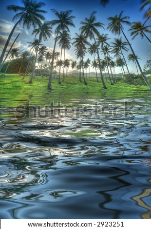 Tropical palm trees in the late afternoon sun - reflection in the water