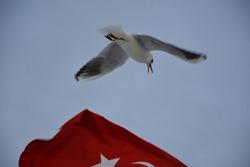 turk flag and white seagulls