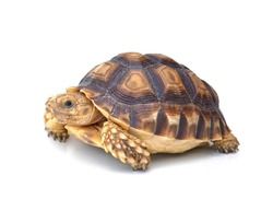 turtle on white background