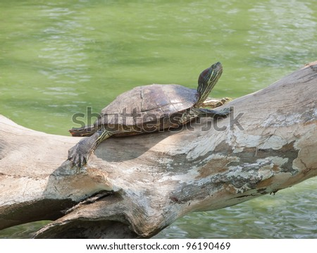 turtle sunbathe on the tree log
