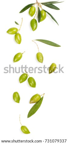 Twig of olive tree and green olives fruits isolated on white background. Above view.