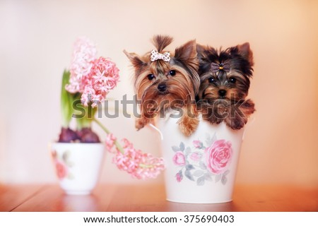 Stock Photo 
