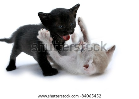 Two cute cats in love - stock photo