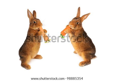 two rabbit with carrot in paws ���®n a white background