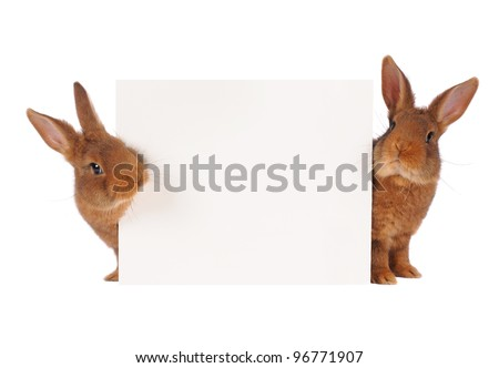 two rabbit with sheet for a text writing - stock photo