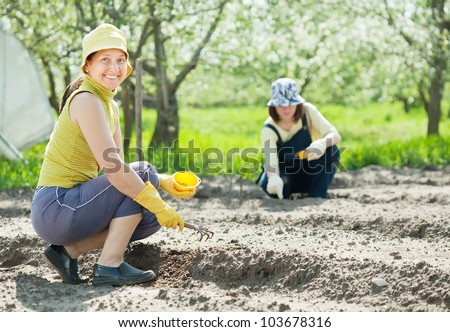 Two women works at vegetables garden in spring