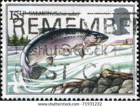 UK - CIRCA 1983: A stamp Printed in United Kingdom shows jumping salmon,  series British River Fishes, circa 1983