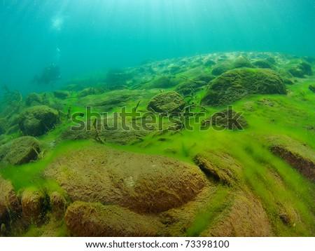 """""""underwater landscape"""""""