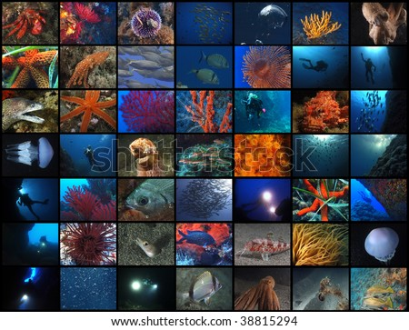 49 underwater pics from submerged world. #38815294