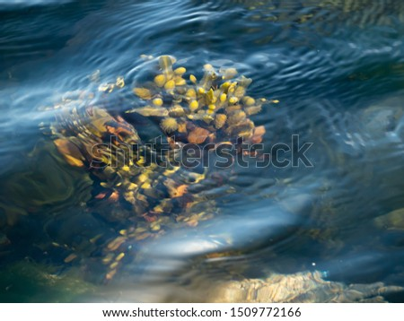 underwater plant with fruits from the surface #1509772166