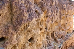 Unfocused photography of Lizard nests on the cliff. the lizard makes a hole in the cliff for shelter. reptile habitat at mountain