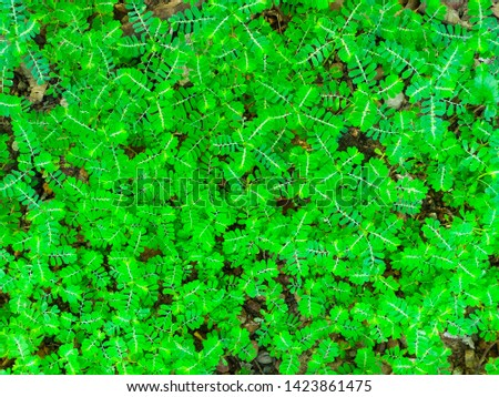 ๊Unwanted flora closeup, Nature background #1423861475