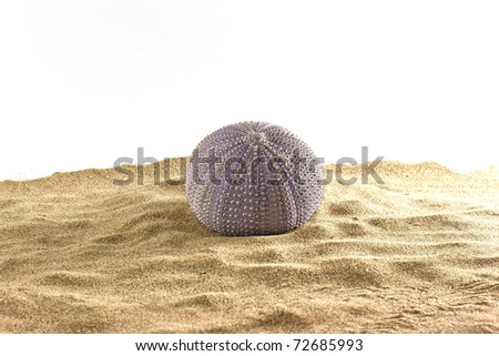 ,urchin on the sand,