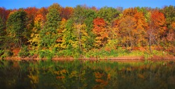 ���°utumn forest on the bank of the river and its reflection in the water