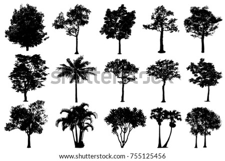 Vector trees in silhouettes. Create many more trees with leaves  , The collection of silhouettes trees. - Shutterstock ID 755125456