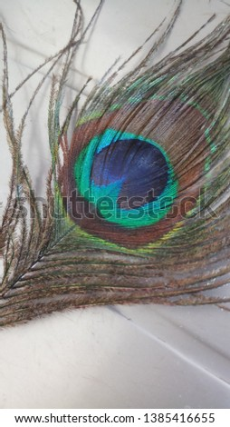 View of a colourful feather #1385416655