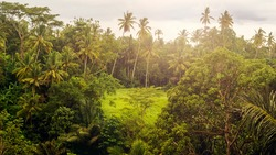 View of the rainforest. Jungle. Natural background. Bali