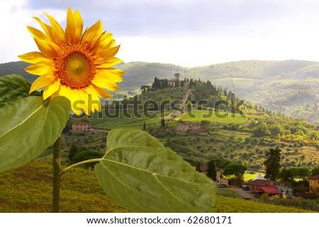 Vineyeard in Chianti, Tuscany, Italy, famous landscape